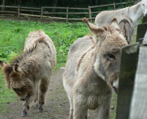donkeys in trim